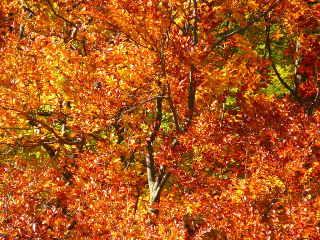 forest-63279_1280